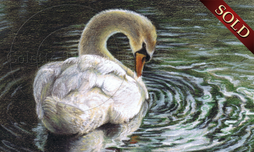 Sandpaper Drawings Mute Swan Drawing Artwork by