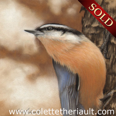 Male red-breasted nuthatch bird painting