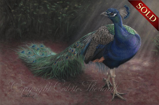 Peacock pastel painting