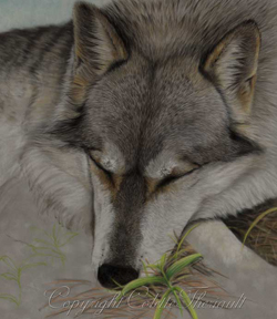 step 5 wolf painting