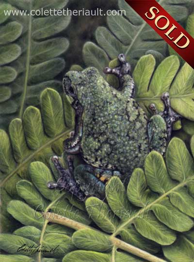Gray Tree Frog Painting pastel art