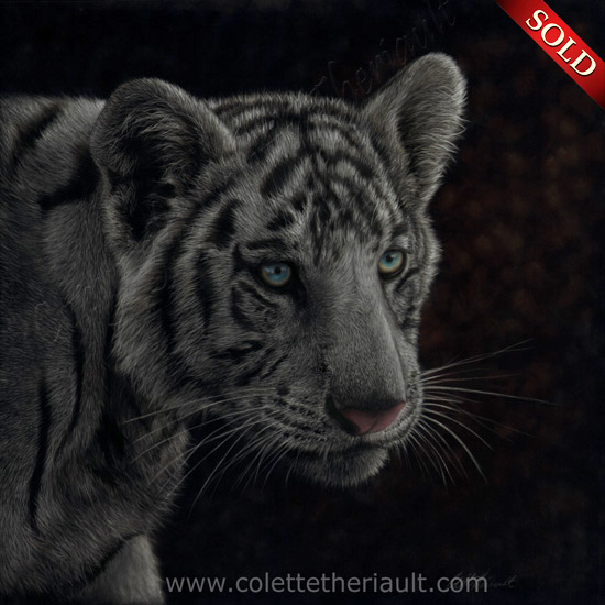White tiger cub painting in pastel by Canadian animal artist Colette Theriault