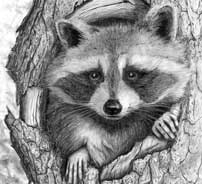 Wildlife Art Drawings