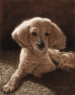 Maltese mix final portrait step on the easel