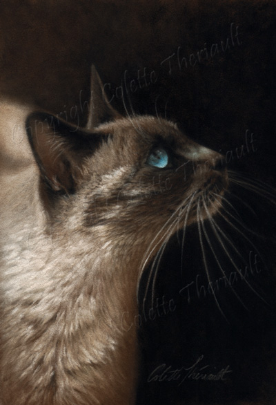 Cat pet Portraits paintings